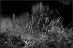 leaves of grass - 3